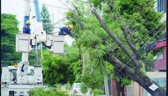 Fuertes vientos derriban árboles en Guadalajara, Jalisco