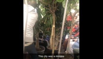Metro-Nueva-York-jardin-tropical-metro-paralizado-plantas