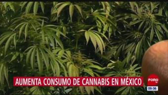Aumenta consumo de marihuana en México