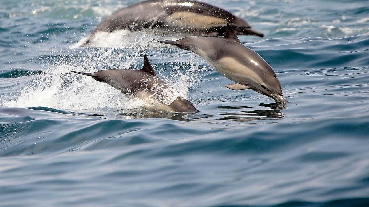 Buzos perdidos afirman que delfines los acompañaron (AP)