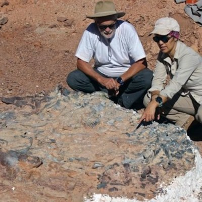 Descubren cementerio de dinosaurios de 200 millones de años