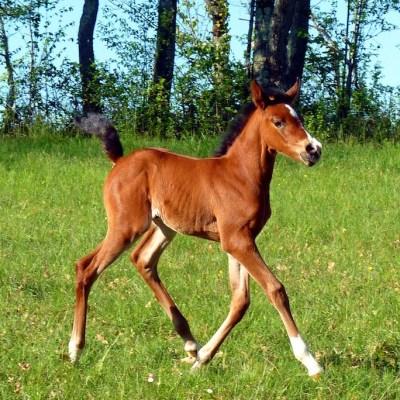 Especie extinta de caballo podría regresar a la vida por la clonación