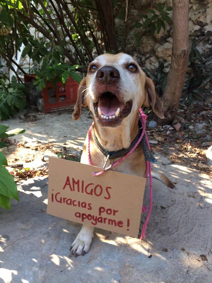 foto deko perro vende postres 2