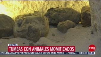 FOTO: Descubren decenas de ratones momificados en antigua tumba en Egipto, 7 de abril 2019
