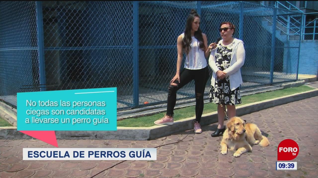 Escuela de perros guía