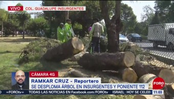 Fuga de agua provoca caída de árbol en Insurgentes Norte, CDMX