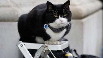 Nombres-gatos-estudio-cientifico-comportamiento-animal-sonidos