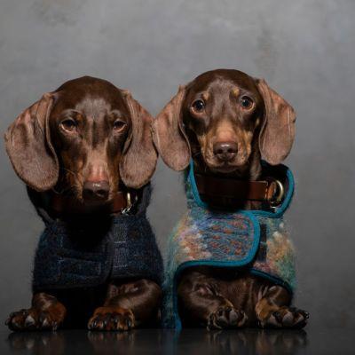 Perros podrían portar nuevo y mortal virus para los humanos