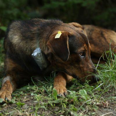 Proponen castigar con cárcel maltrato animal en CDMX