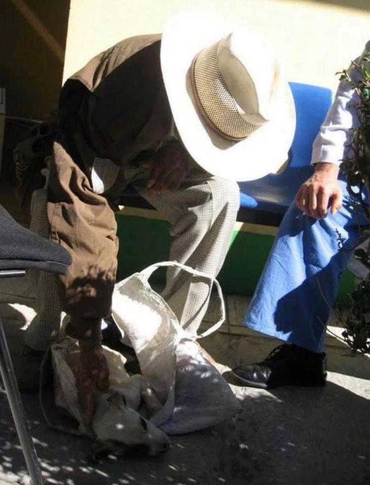 Anciano lleva a su perrito a un hospital de humanos y médicos lo atienden