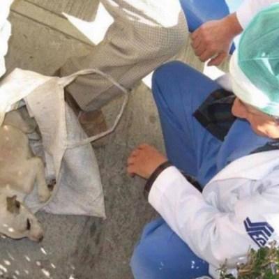 Anciano lleva a su perrito a un hospital y médicos lo atienden