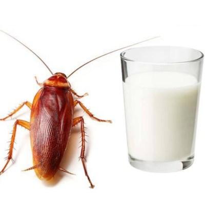 Leche de cucaracha: Es real y así se toma