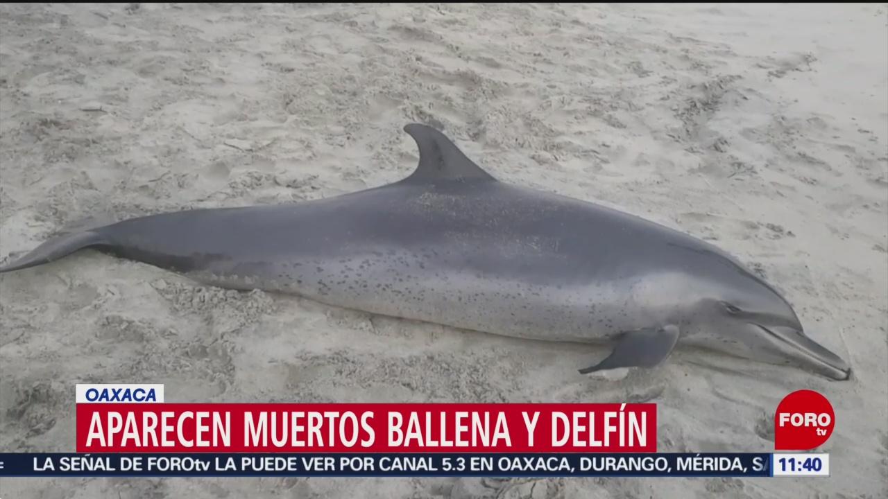 FOTO: Localizan ballena y delfín muertos en playas de Oaxaca, 27 ABRIL 2019