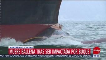 Foto: Muere Ballena Golpeada Buque Colima 25 de Abril 2019