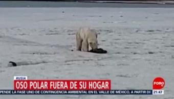 FOTO: Oso polar podría haberse extraviado por cambio climático, 18 ABRIL 2019