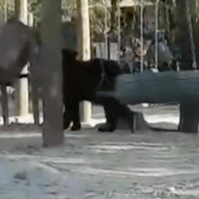 Video: Oso sorprende a familias en parque de Nuevo León