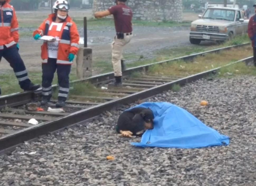 foto 'El Bronco' adopta a perrito que cuidó a su dueño atropellado por el tren 4 abril 2019