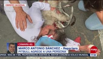 Foto: Perros atacan a mujer y a su mascota