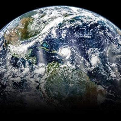 ¡Triste realidad! La Tierra vive la sexta 'extinción masiva'