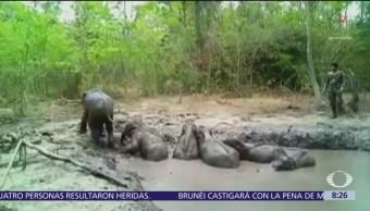 Rescatan a seis crías de elefante en Tailandia