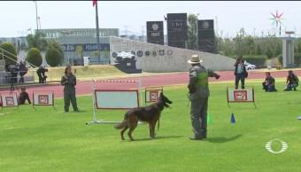 Foto: Unidad Canina Policía Federal Cumple 30 Años 16 de Abril 2019
