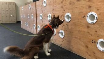 foto ¿Amas a los perros? Crean licenciatura para entrenarlos 7 mayo 2019