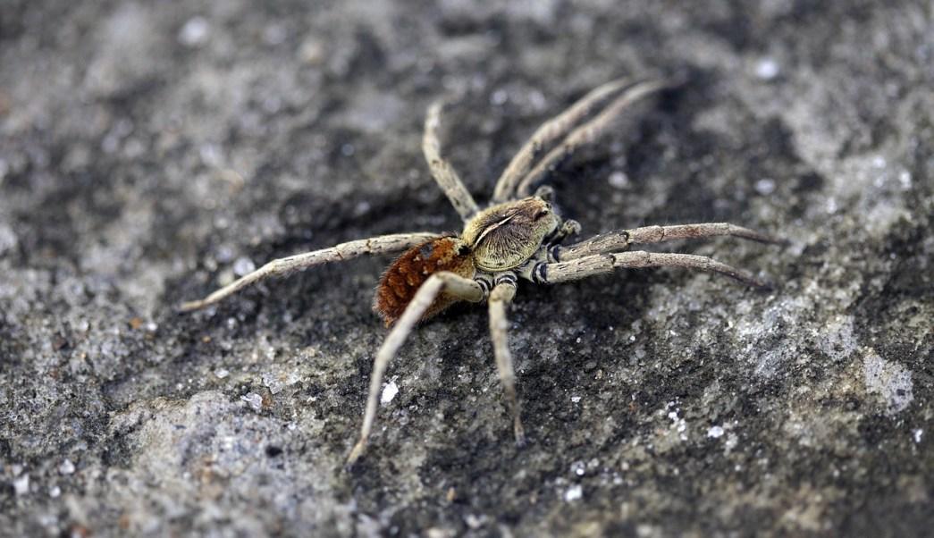 arana-teje-red-insecto-oido-video-viral-China