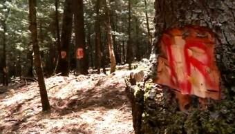 Realizan operativo en zona de árboles marcados en el Desierto de los Leones