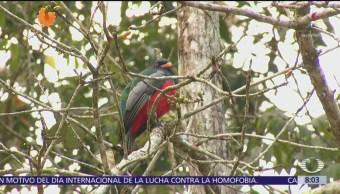 Belice, opción sustentable para practicar el aviturismo o avistamiento de aves