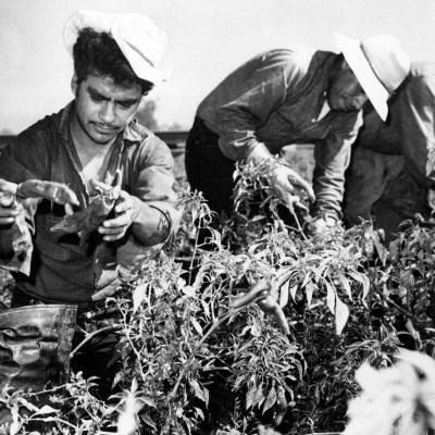 Cuando Estados Unidos buscaba y rogaba por trabajadores mexicanos