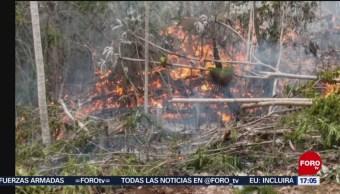 FOTO: Brigadistas batallan por combatir dos incendios forestales en Quintana Roo, 25 MAYO 2019