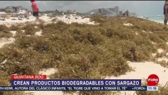 Con sargazo crean productos biodegradables en Quintana Roo