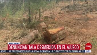 Denuncian tala desmedida en el Ajusco pese a contingencia ambiental