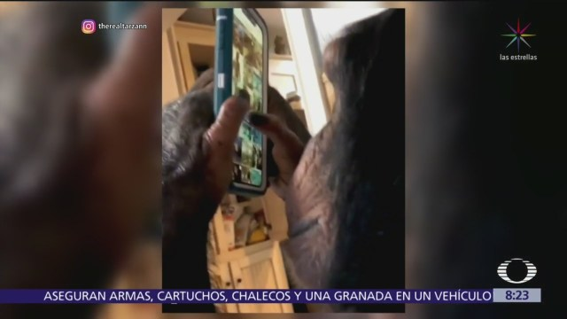 El chimpancé que saber usar Instagram