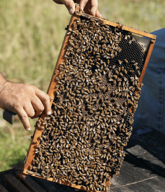 Foto: Colmena de abejas en Florida, Estados Unidos, 12 de octubre de 2018, Estados Unidos