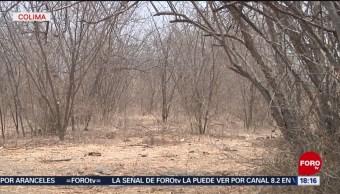 Foto: Extiende periodo de vigilancia por sequía en Colima