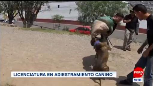 Extra, Extra: Licenciatura en adiestramiento canino
