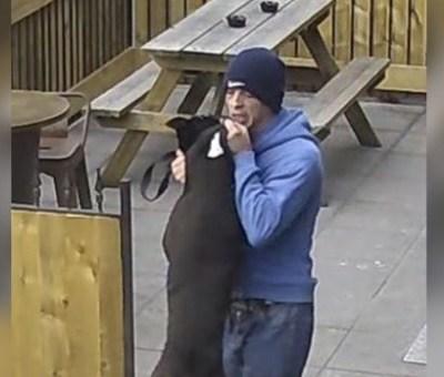 Video: Hombre golpea brutalmente a perro después que se le escapó