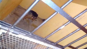 Alcalde encarcela perro en Oaxaca,asociación exige liberarlo