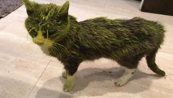 foto Muere gatita tras ser rociada con pintura de aceite 21 mayo 2019