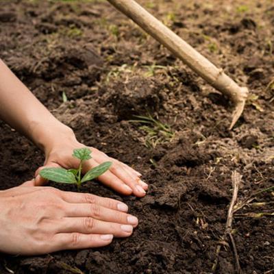 Filipinas obligará a plantar árboles a cada estudiante graduado