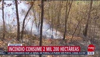 Foto: Incendio Forestal Sierra Gorda Querétaro 24 Mayo 2019