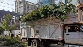 Detienen a personal de construcción de Torre Mitikah por tala de árboles en Xoco