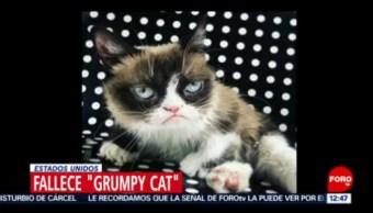 Muere la gata más famosa de internet 'Grumpy Cat'