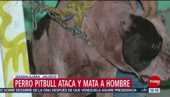 Perro pitbull ataca a presunto ladrón en Guadalajara, Jalisco