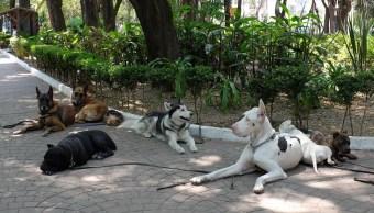 foto Detienen a dos perros por meterse a una fuente en CDMX 30 marzo 2017