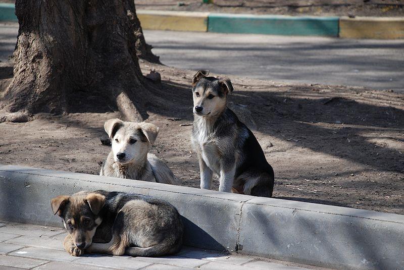 Perros-Perro-Mujer-Policía-Perritos-Animales-Derechos-Maltrato-Animal, Ciudad de México, 19 de mayo 2019