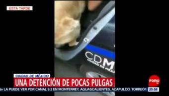 Foto: Policías cdmx Detienen Perros Fuente 23 Mayo 2019