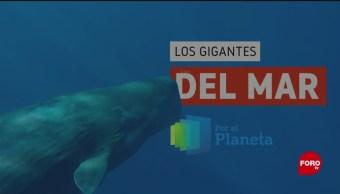 FOTO: Por el Planeta: Los gigantes del mar, 4 MAYO 2019