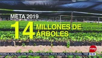 FOTO: Producen miles de árboles en viveros en Tabasco